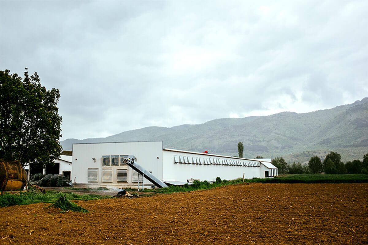 Бели Мост - Живинарска Фарма за производство на јајца - Фарма